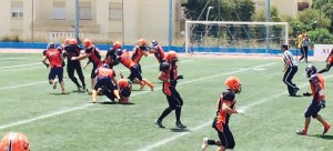lions coyotes 2015